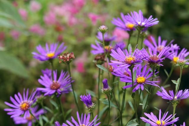 Fotografie - Planten un Blomen