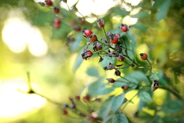 Fotografie Herbstspaziergang