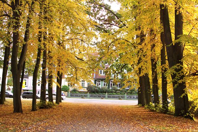 Fotografie + Gedicht - Herbstmagie Lindenallee