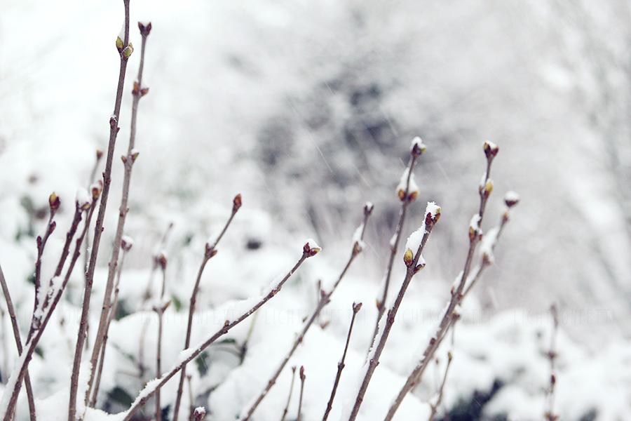 Münster im Schnee