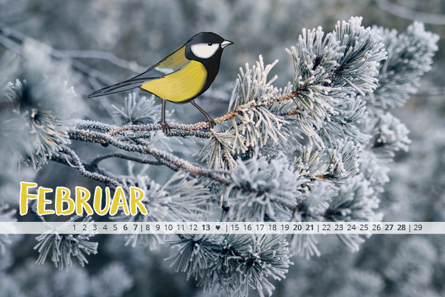 free Wallpaper Februar 2016 - Winter Vogel Kohlmeise