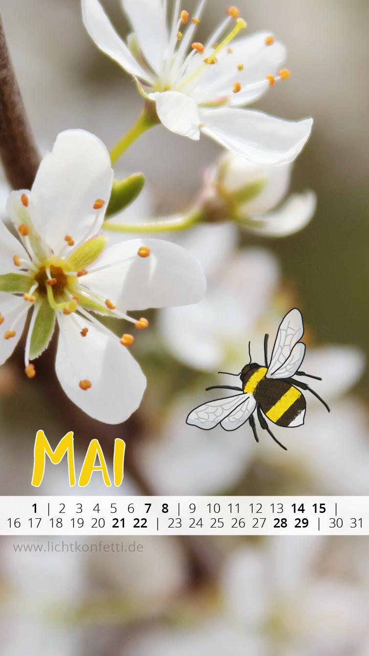 free Wallpaper Mai 2016 iPhone - Frühling Kirschblüte Hummel