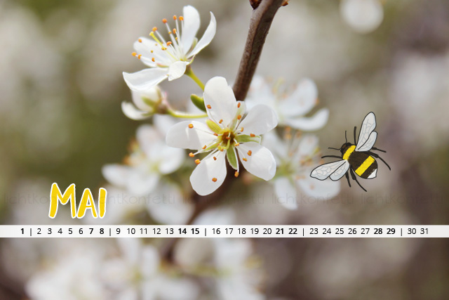 free Wallpaper Mai 2016 - Frühling Kirschblüte Hummel
