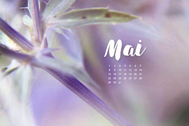 free Wallpaper Mai 2017 - Frühling Bokeh