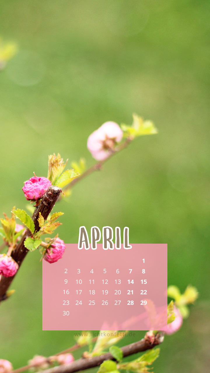 free Wallpaper April 2018 iPhone - Frühling Knospe