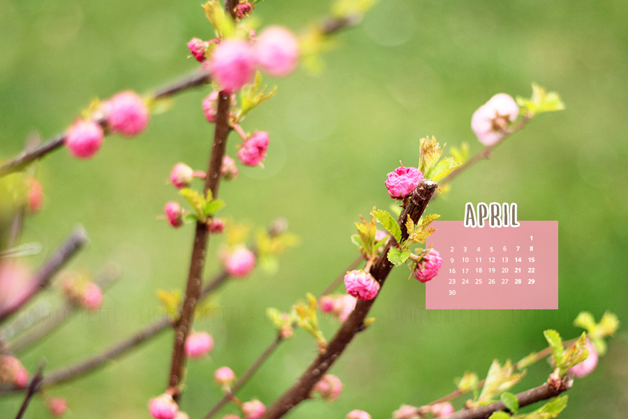 free Wallpaper April 2018 - Frühling Knospe