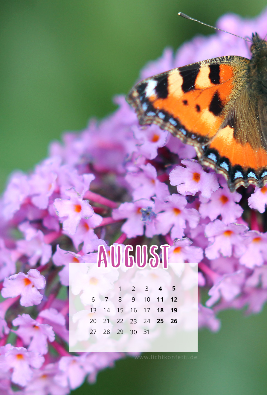 free Wallpaper August 2018 iPhone - Sommer Schmetterling