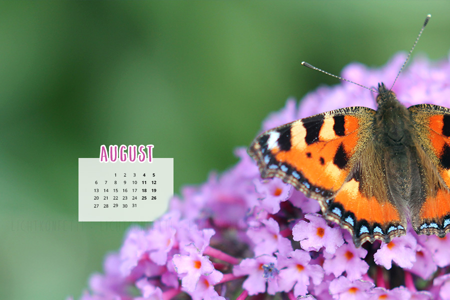 free Wallpaper August 2018 - Sommer Schmetterling