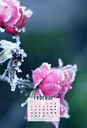 free Wallpaper Februar 2019 iPhone - Frost Rose