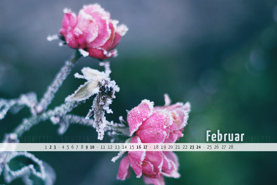 free Wallpaper Februar 2019 - Frost Rose